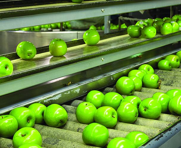 Apples of a factory conveyor belt