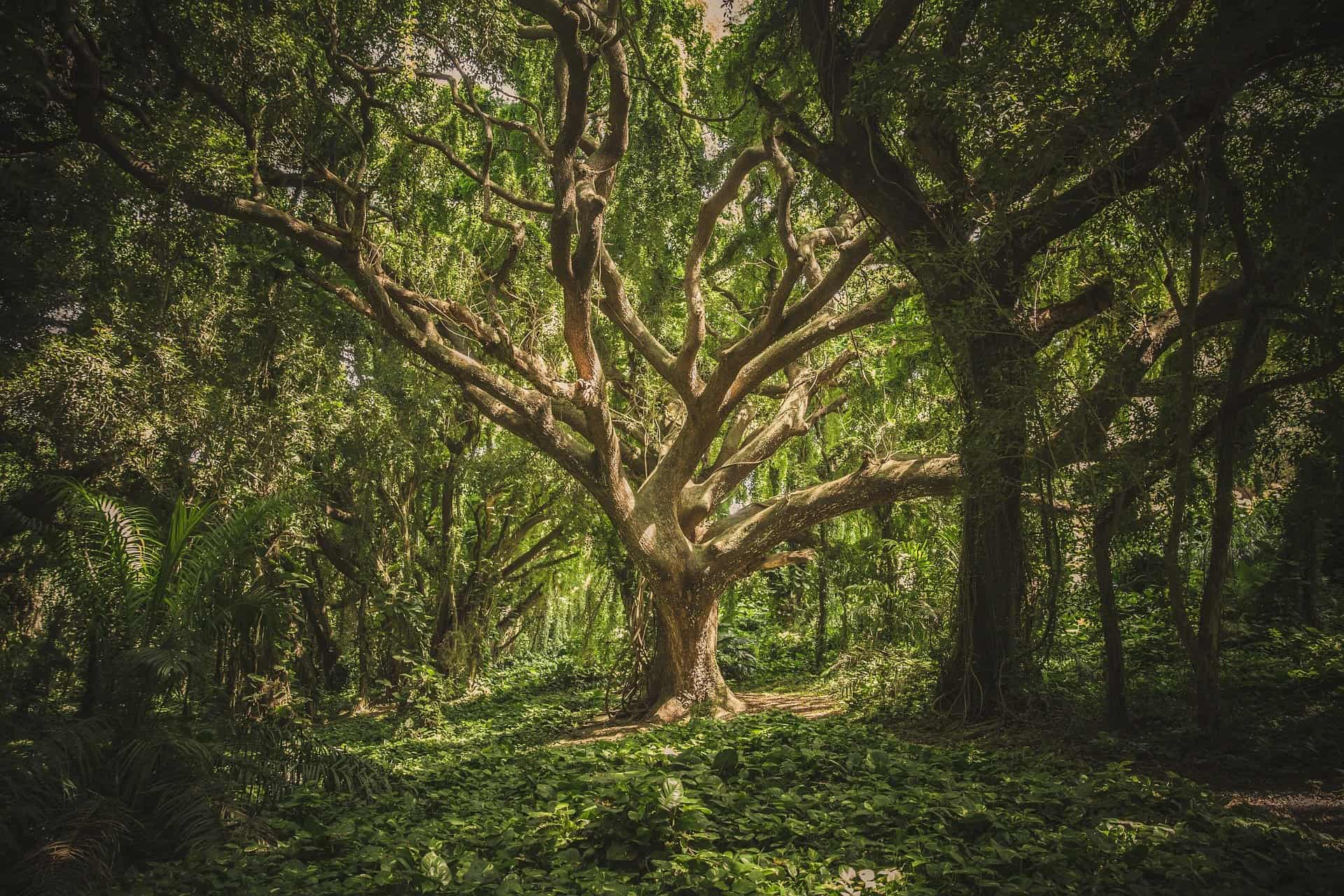 Large tree in wood